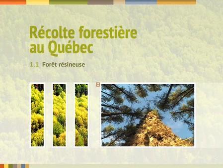 Vidéo : 1.1 Forêt résineuse