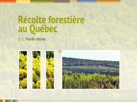Vidéo : 2.1 Forêt mixte