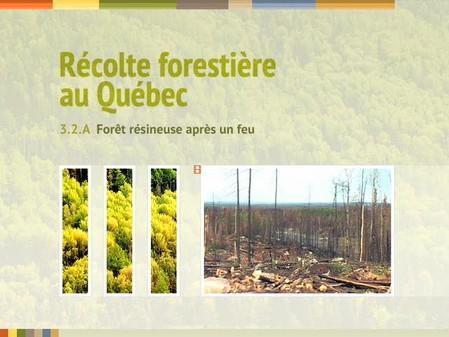 Vidéo : 3.2.A Forêt résineuse après un feu