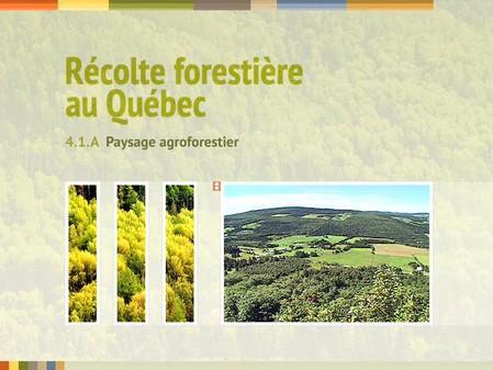 Vidéo : 4.1.A Paysage agroforestier
