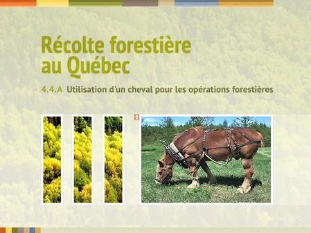 Vidéo : 4.4.A Utilisation d'un cheval pour les opérations forestières